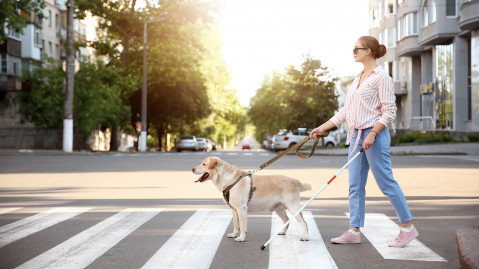 A woman wearing sunglasses is crossing the street holding a white cane and a guide dog on a leash