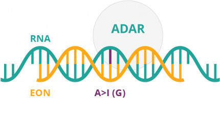 An infographic showing ADAR function